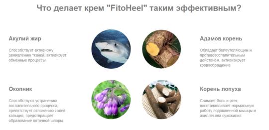 Состав препарата FitoHeel