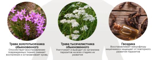 Состав препарате Detoxic